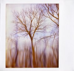 Polaroid by Andy Jenkins (Flickr) Impossible Project, Experimental Photography, Minimalist Photography, Polaroids, Story Inspiration, Collage, Abstract, Artwork, Projects