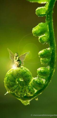 Fantasy Fairy Fairytale Enchanting