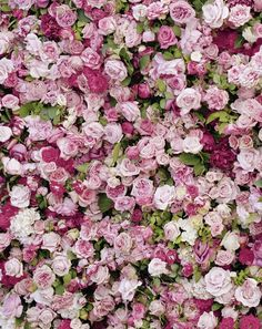 Wall of pink roses--love!