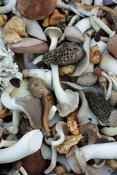 Swiss Mushrooms from the Vevey Market by David Lebovitz