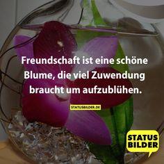 Freundschaft ist eine schöne Blume, die viel Zuwendung braucht um aufzublühen. - Freundschaftssprüche, Freundschafts Gb, Facebooksprüche, coole Sprüche