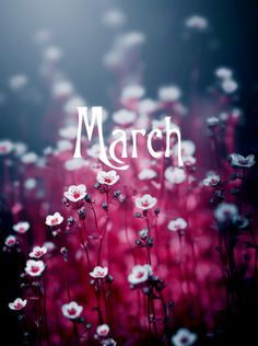 Hello #March be good to us :-)  #beautiful #spring #nature