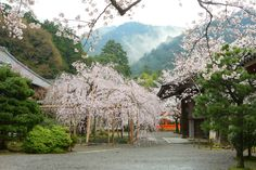 bisyamon02.jpg (960×640)