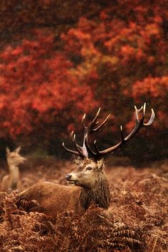 """mcmxxxlll: """" wonderous-world: """" Soggy Stag by Lee Crawley """" """""""