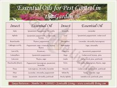 The Best Essential Oils for Gardeners! These Essential Oils are a natural, safe and effective way to repel common Garden pests ~Tanya Patterson ❤purasentials.com❤ essential oils with love