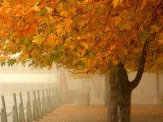 color de otoño suave wallpaper