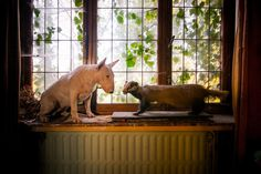 Bully and the Badger © Alice van Kempen - Bull Terrier Photography