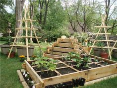 Great use of vertical, stacked, tiered and square foot gardening.