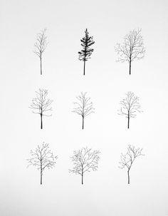Paddle8: New York Street Trees - Katie Holten