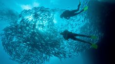 Cover photo Scuba Diving Thailand, Koh Phangan, Koh Tao, Open Water, Beautiful Islands, Cover Photos, Great Places, New Experience, Sailing