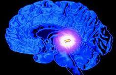 La glande pinéale pourrait être la partie la plus importante de votre système nerveux tout entier. Il s'agit essentiellement d'une antenne spirituelle, votre équivalent physique d'un troisième œil. Il est essentiel pour atteindre des niveaux plus élevés de conscience tout en restant dans un corps physique. La glande pinéale se trouve au centre géométrique du …