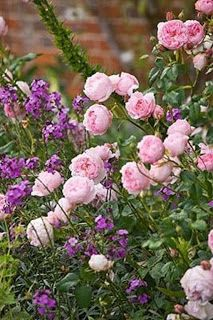 Judys Cottage Garden: 10 Steps to Growing Roses Organically