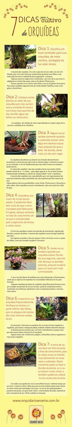 Dicas para o cultivo de orquídeas. Vegetable Garden, Garden Plants, House Plants, Rare Orchids, Orchid Plants, Orchidaceae, Agaves, Love Garden, Green Life