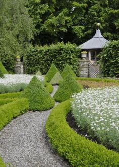 love this pathway in crushed granite, clippped boxwood hedge and topiary box at axis points