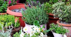 #Gardening : Air Purifying House Plants - My Favorite Things