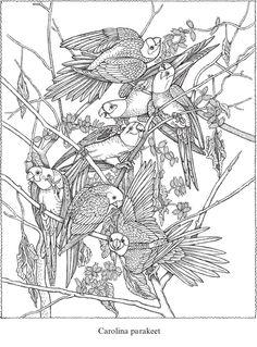 Welcome to Dover Publications Creative Haven Audubon Birds