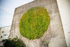 Vine-Covered Wall Transformed Into Inspiring Botanical Graffiti Art - DesignTAXI.com