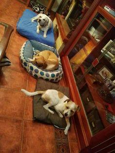 Ratos en casa con Chili,  Silver y Penny 09/16