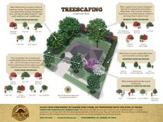 Fannin Treescaping Around Your Home landscaping gardening Landscaping trees, Trees for front yard, B Landscaping Around Trees, Backyard Trees, Privacy Landscaping, Home Landscaping, Garden Trees, Front Yard Landscaping, Trees To Plant, Trees For Front Yard, Privacy Trees