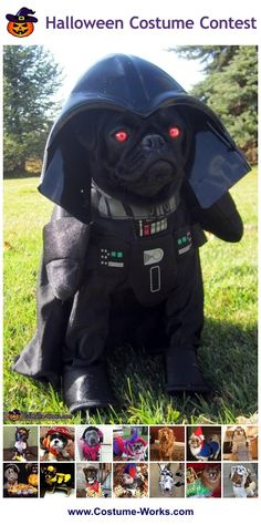 DIY Costumes for Pets - tons of homemade costume ideas!