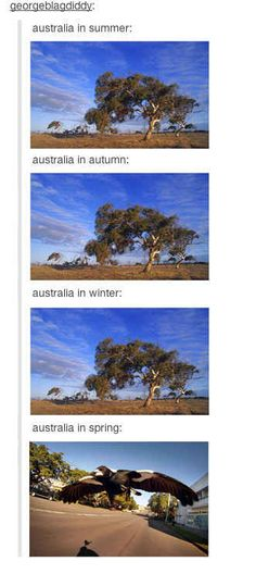 Seriously, that bird life though. | 29 Times Australians Were The Realest On Tumblr