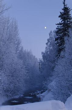 The moon coming up in Chena Hot Springs, Alaska