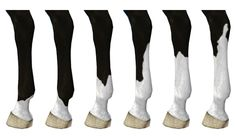 6 hind left leg markings - by Raymond Equestrian Centre Cute Horses, Pretty Horses, Horse Color Chart, The Sims 3 Pets, Arte Equina, Horse Markings, Horse Mane, Horse Pattern, Anime Poses Reference