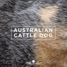 #Dog-Inspired #Design: We think the best, most #beautiful #coats belong to our four-legged family members. #AustralianCattleDog