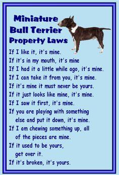 Miniature Bull Terrier Fridge magnet various by MagnetsAndHangers
