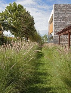 Brazilian ironwood trees and ornamental grasses soften the property's bold façade.