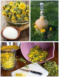 Make Dandelion Wine, Jelly, Syrup & More Be bold - if you can find some dandelions that have not meet sprayed to death with chemicals, these are great uses of a very healthy and useful plant who seems to survive all our attempts at annihilation and keeps giving us a second chance to enjoy its benefits!