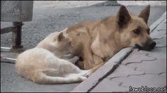 kitty snuggles dog gif