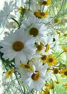 All the Daisy Pins are for my Shelley~ Her favorite flower, Love you so very much, Kim Happy Flowers, Flowers Nature, My Flower, White Flowers, Beautiful Flowers, Anemone Flower, Simply Beautiful, Daisy Love, Daisy Girl