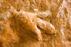 dinosaur tracks at dinosaur discovery site johnson farm st george utah ...