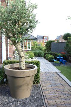 Grote pot met olijfboom pot is van kunststof in Taupe kleur www.biesot.nl