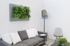 Located in Hawaii, we provide customized sustainable living plant wall design & systems. Our custom green wall systems bring the beauty of plants to your space. Interior Plants, Interior Design, Vertical Garden Systems, Live Picture, Picture Frame, Beautiful Living Rooms, Plant Wall, Sustainable Living, Wall Design