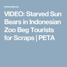VIDEO: Starved Sun Bears in Indonesian Zoo Beg Tourists for Scraps | PETA