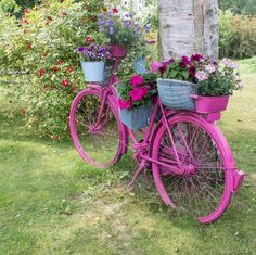 Pink bicycle outfitted with many flower holders.