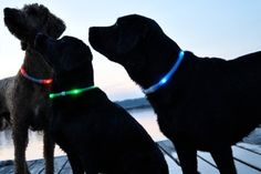 LED collars for your dog! Make him/her easy to find. I so need this!