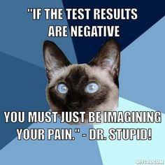 Chronic Illness Cat / Dr. Stupid