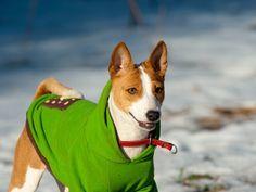 Algunas ideas de cómo hacer ropa para mascotas - Mis animales