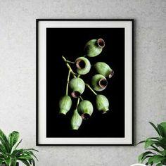Pink & Black Gum Blossom Print Australian Nature Photography | Etsy Floral Photography, Macro Photography, Native Australians, Canvas Prints, Framed Prints, Black Gums, Botanical Wall Art, Native Plants, Pink Black