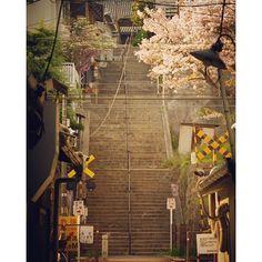 【hoian99】さんのInstagramをピンしています。 《尾道夕景。 #尾道 #夕景 #階段 #寺院 #広島 #踏切 #桜 #onomichi #evening #stairs #temple #japan #hiroshima #railroadcrossing #crossing #pentax》
