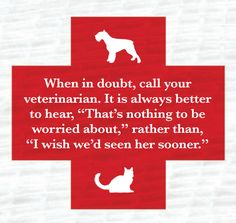 A good rule to remember for all pet parents: When in doubt, call the vet!