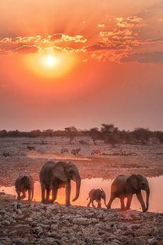 Elephant family at the waterhole