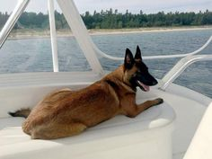 Rylee, a 10-month-old Belgian Malinois, was reunited with her owners on Aug. 29…