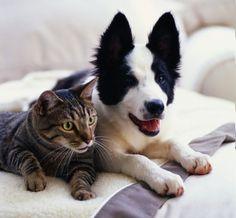Pet-friendly events in Fairfax! See:  http://fairfaxfamilyfun.com/pet-friendly-fairfax/