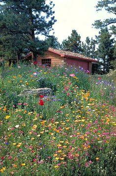 I love flower filled meadows