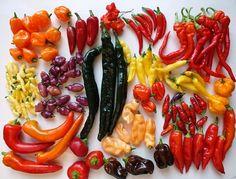Achtergrondinformatie en kweekhandleiding voor pepers.