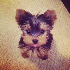 Look at that tongue. too cute.